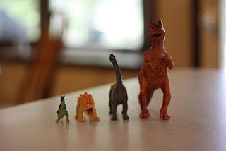 Biggest to Smallest with Dinosaurs (and Footprints too)