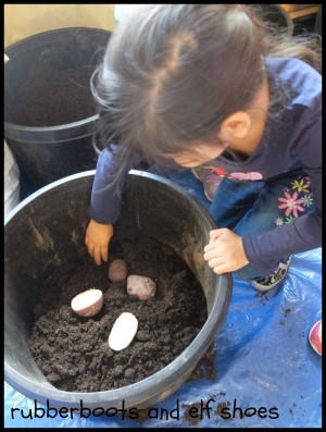 Planting Spuds in Tubs
