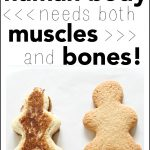 Why the Human Body Needs Both Muscles and Bones