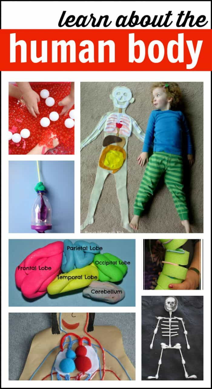 human body activities for preschoolers human activities for i can teach my child 737