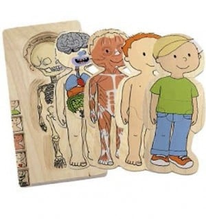My Body Puzzles 300x319 Human Body Activities for Kids