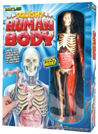 Squishy Human Body Human Body Activities for Kids