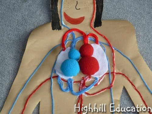 human body 8 Human Body Activities for Kids