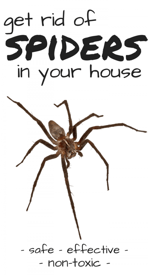How To Get Rid Of Spiders Natural Ways