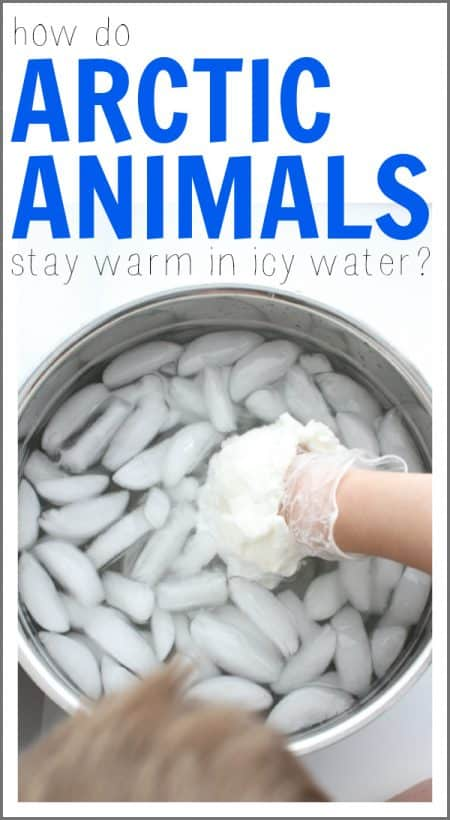 Science Fair Project - How Do Arctic Animals Stay Warm in Icy Water