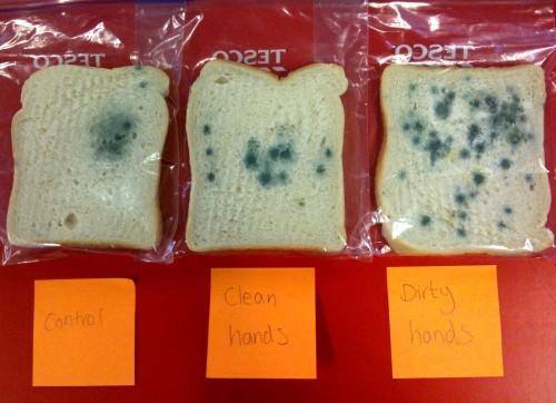 Moldy Bread Experiment
