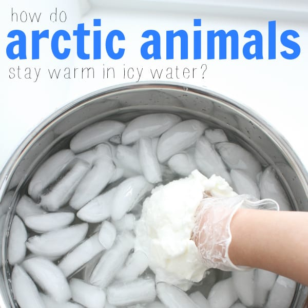 arctic animals in icy water square