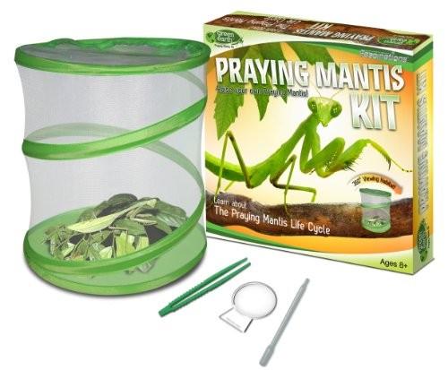 praying mantis kit