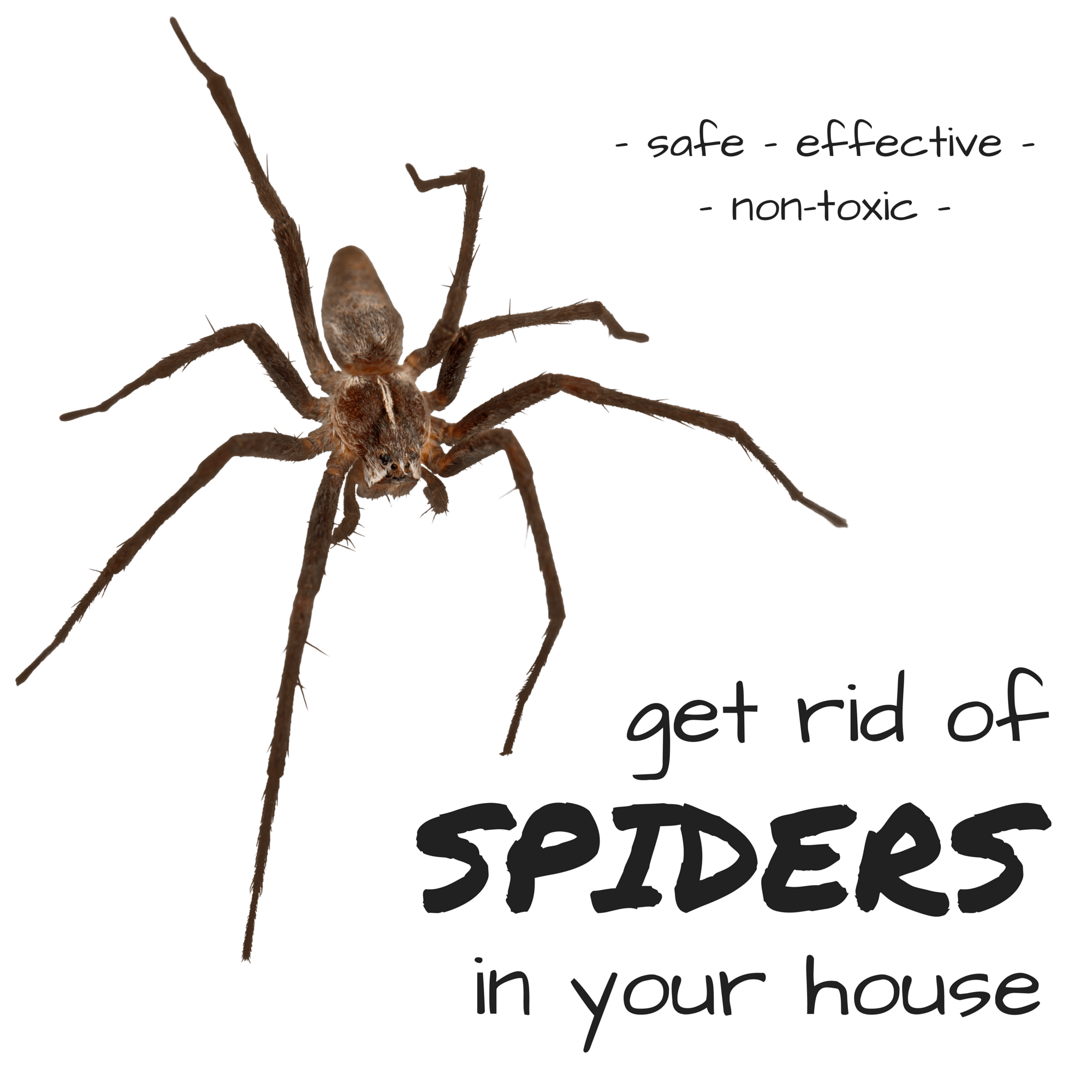 how to get rid of spiders in your home