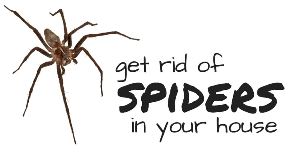 Natural Product To Get Rid Of Spiders