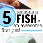 5 Reasons a Fish is an Awesome First Pet
