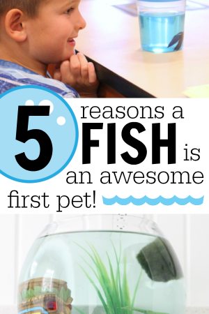 5 Reasons a Fish is an Awesome First Pet for Your Child