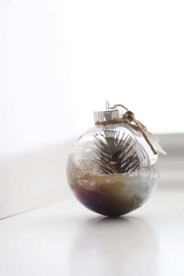 Living Pine Tree Ornament