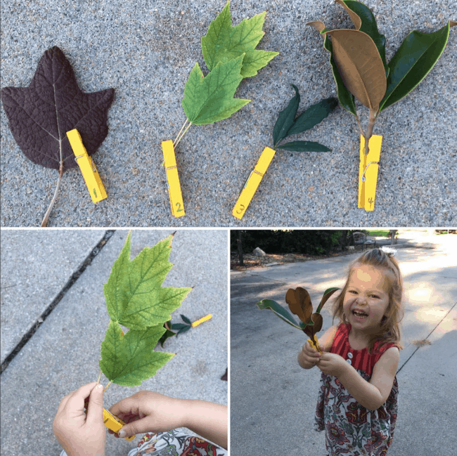 counting-leaves-on-a-stem