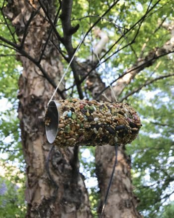 DIY Toilet Paper Roll Bird Feeder