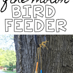 Fine Motor Bird Feeder
