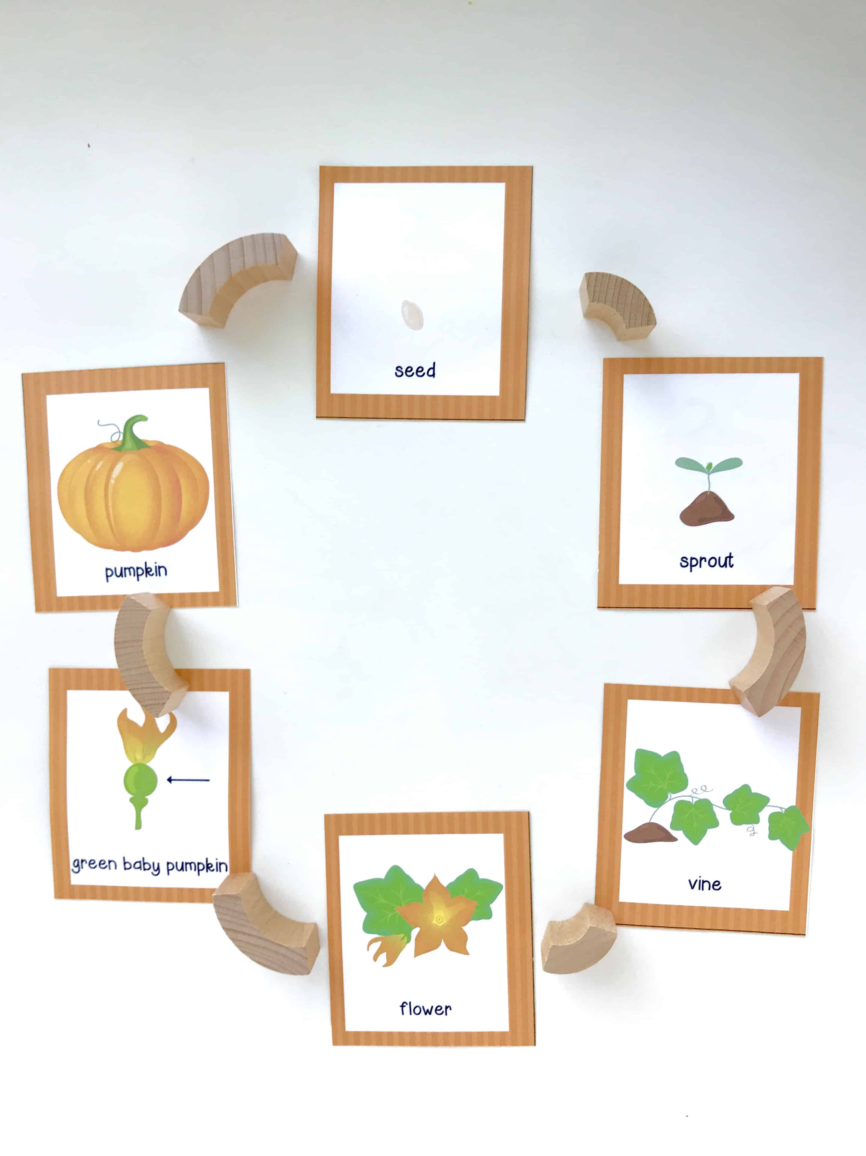 photograph regarding Pumpkin Life Cycle Printable known as Pumpkin Daily life Cycle Printable Memory Activity - I Can Prepare My Baby!