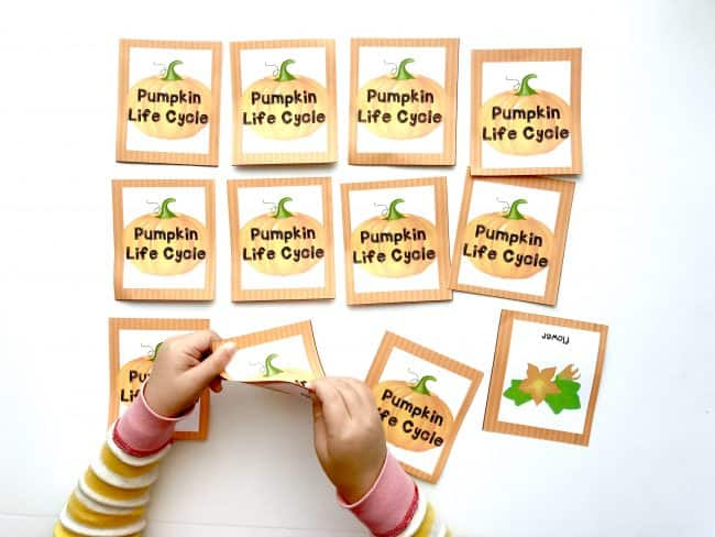 Playing Pumpkin Life Cycle Printable Memory Game