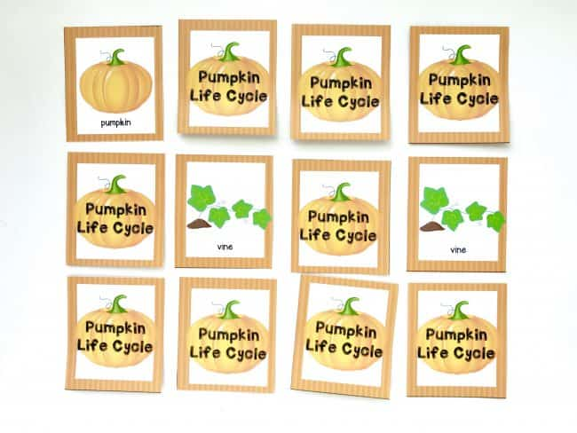 Pumpkin Life Cycle Memory