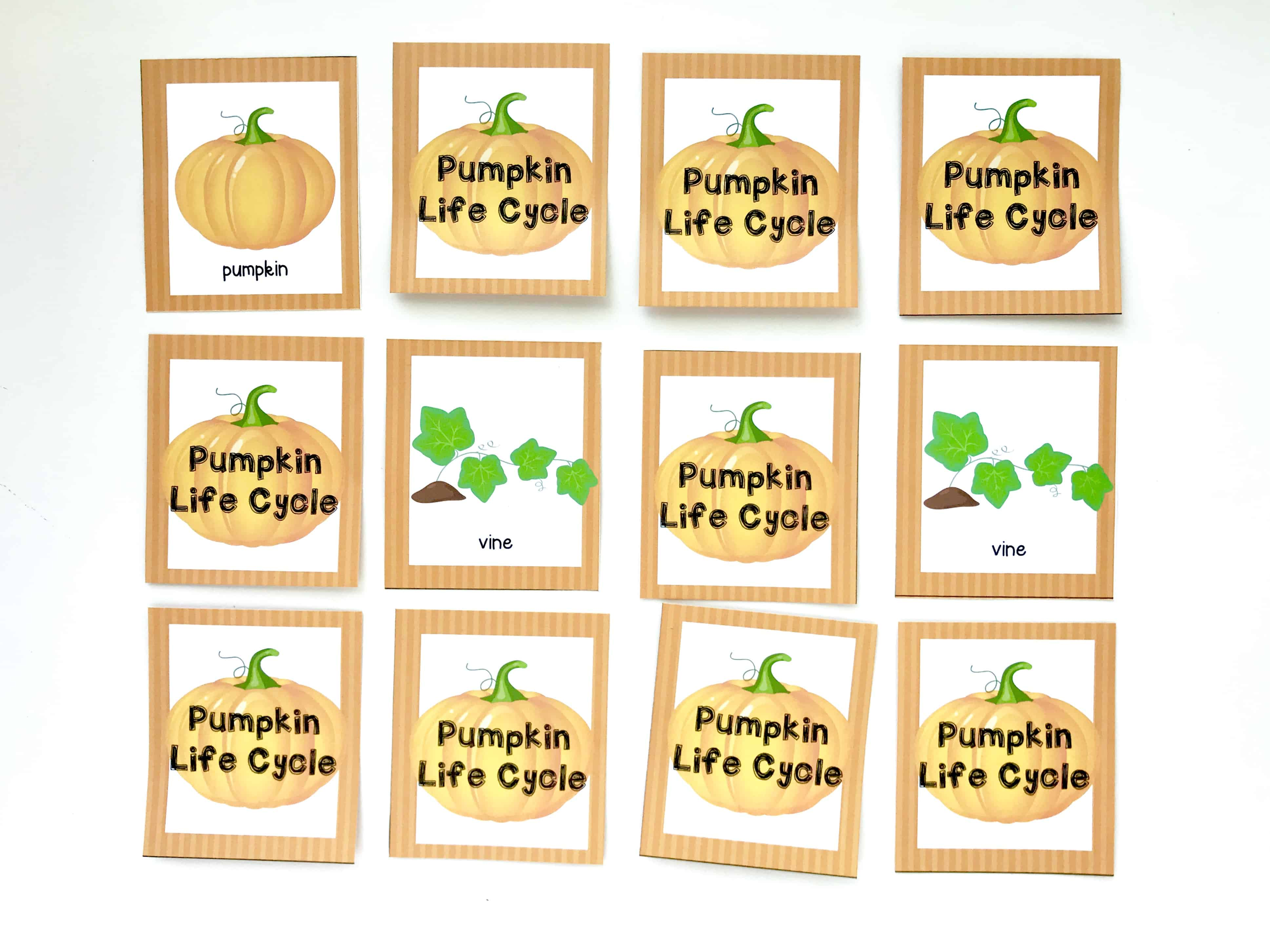 graphic relating to Pumpkin Life Cycle Printable named Pumpkin Everyday living Cycle Printable Memory Sport - I Can Coach My Little one!