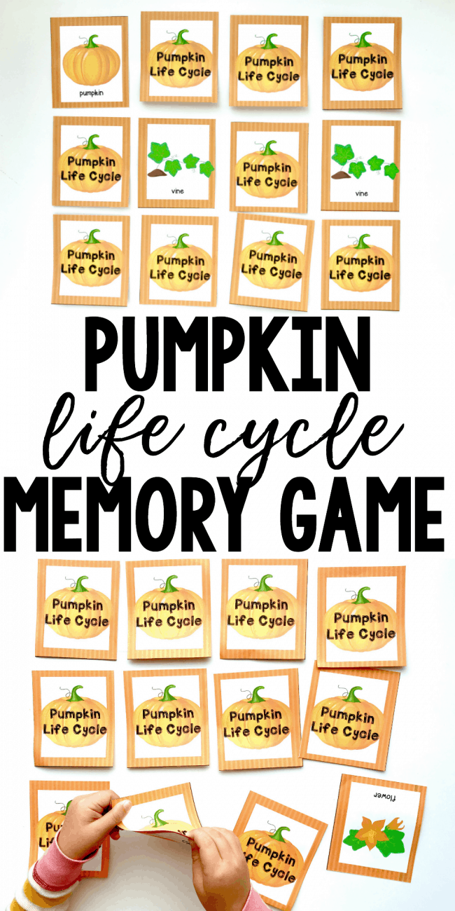 photograph regarding Pumpkin Life Cycle Printable identified as Pumpkin Daily life Cycle Printable Memory Video game - I Can Practice My Little one!